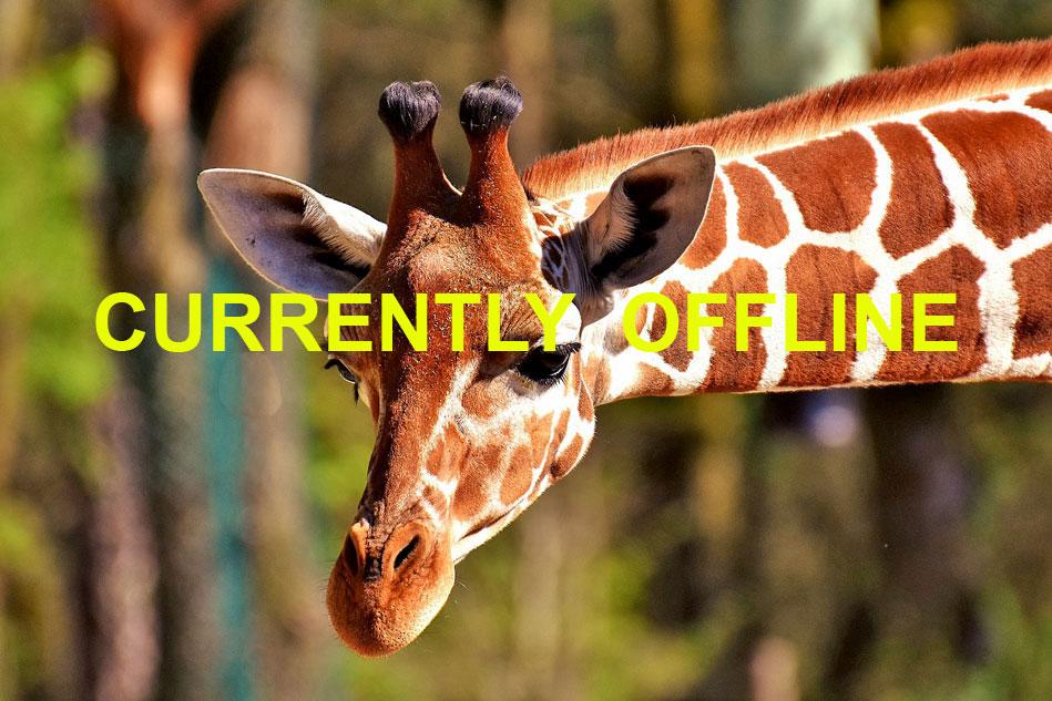 head of a giraffe