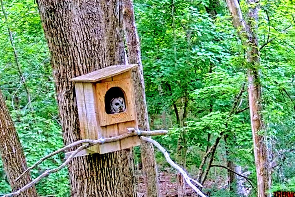 barn owl nest box on a tree