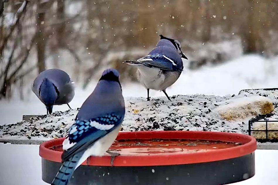 bird feeder in minnesota