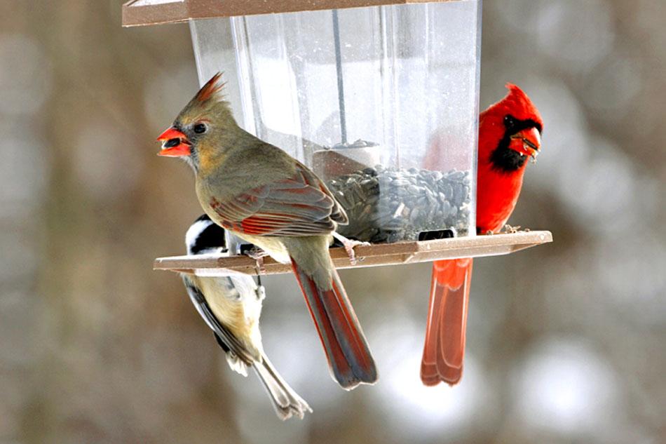 bird feeder in murrysville
