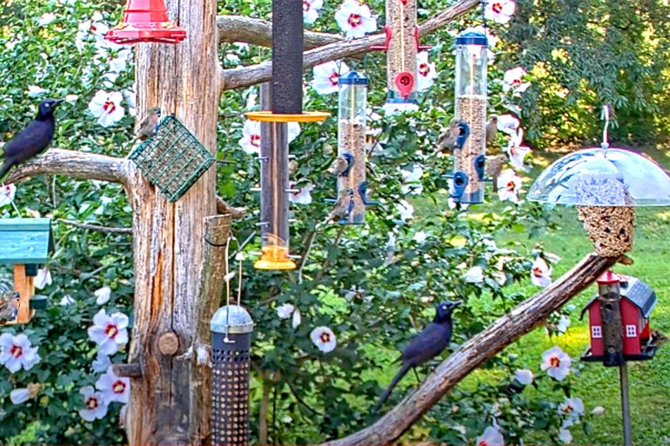 birds at feeders in pennsylvania