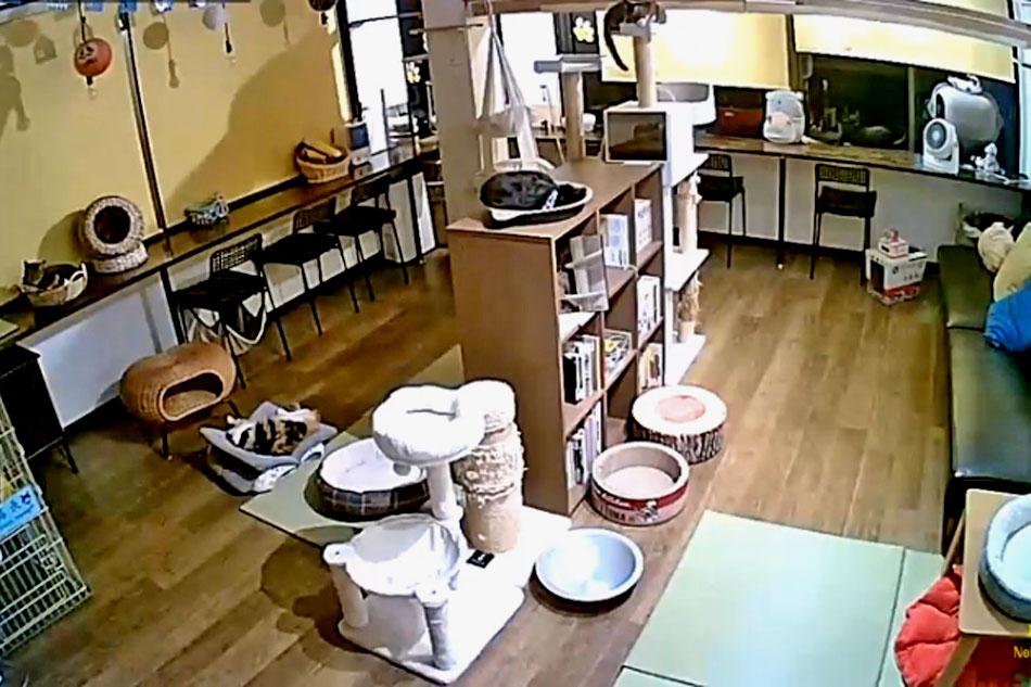kyoto cat cafe