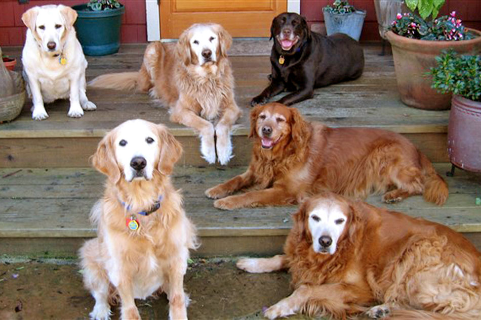 group of senior dogs