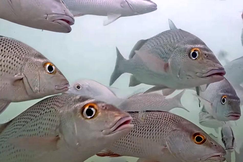 fish in florida
