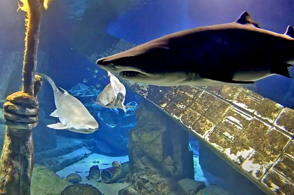 Sharks at long island aquarium