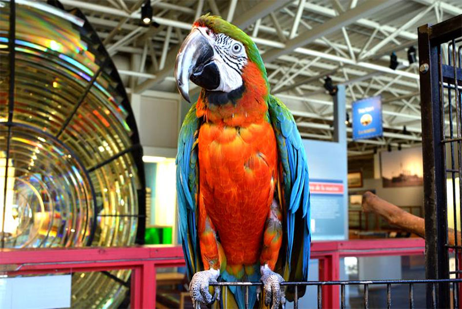 Merlin the talking Rainbow Macaw