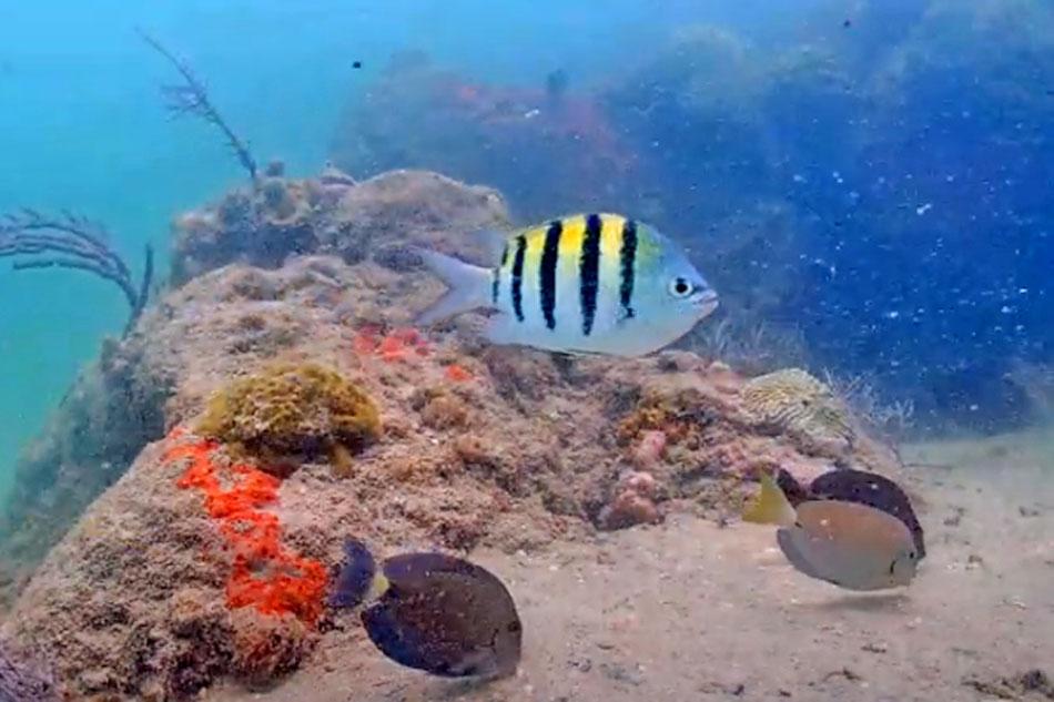 underwater webcam miami