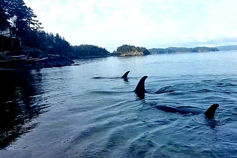 orcas beach rubbing