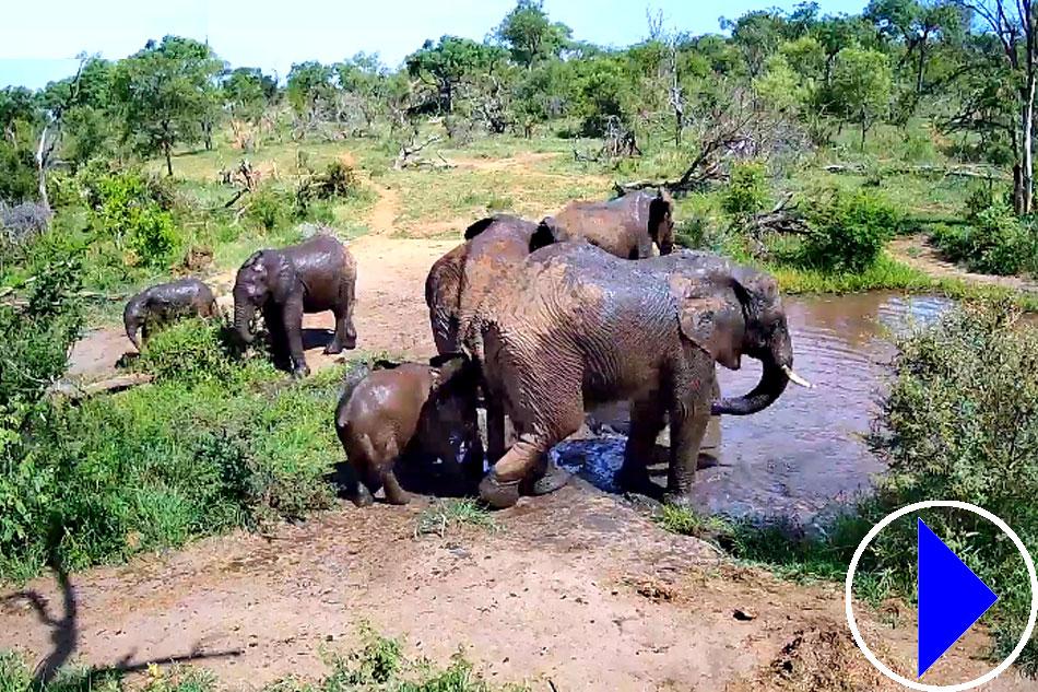 elephants at pridelands conservancy
