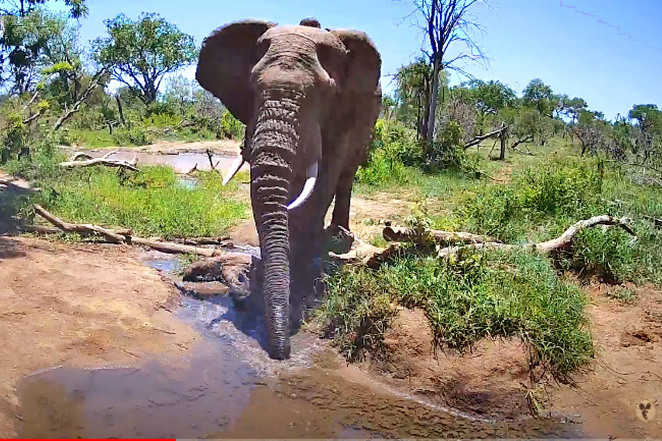 an elephant at pridelands conservancy