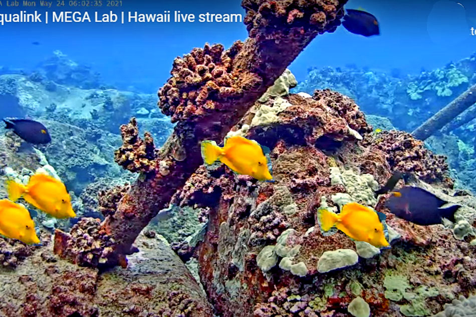 reef fish hawaii