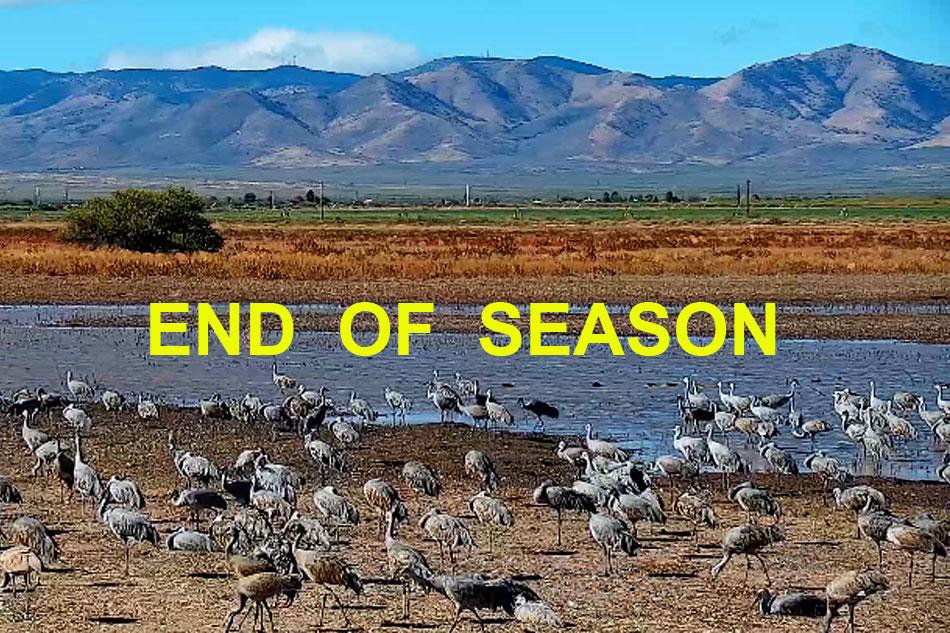 sandhill cranes in arizona