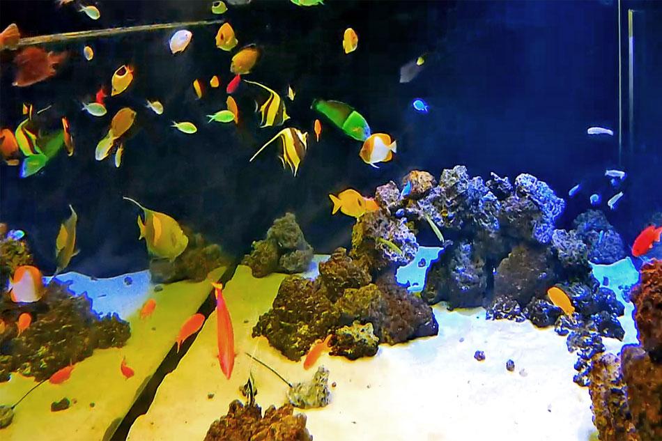 fish at the shedd aquarium