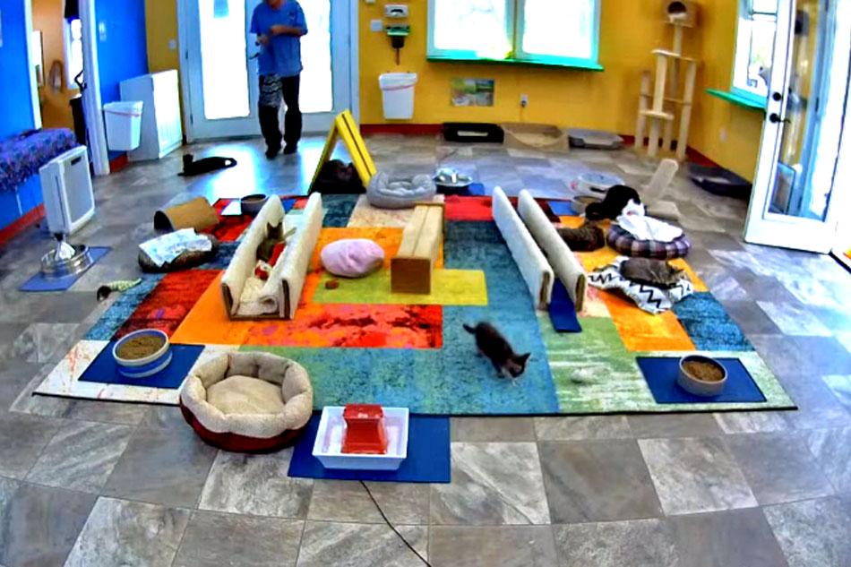 Snap cats kitten room