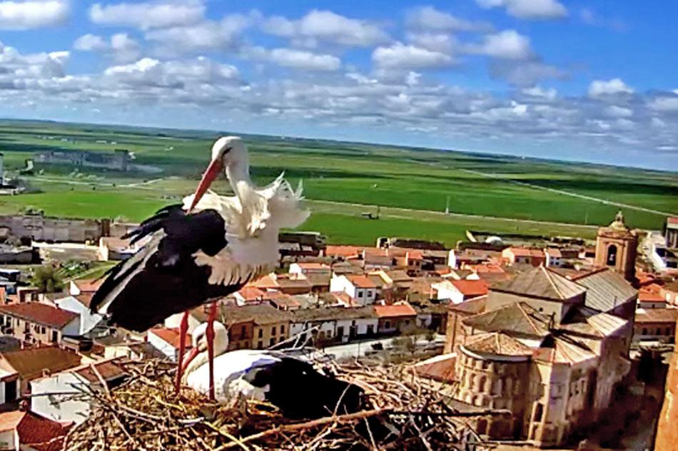 storks in avila spain