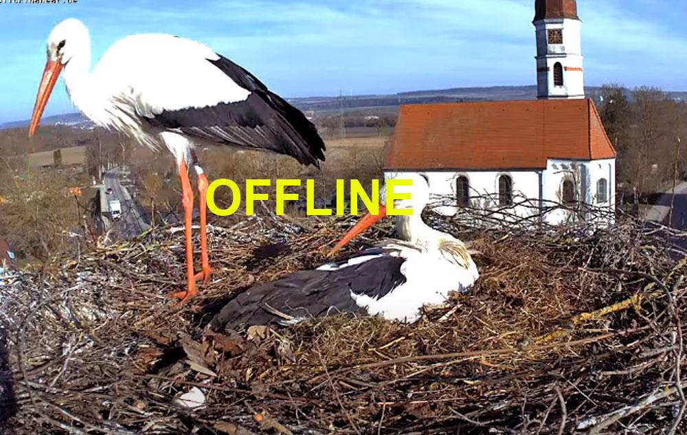 storks in germany