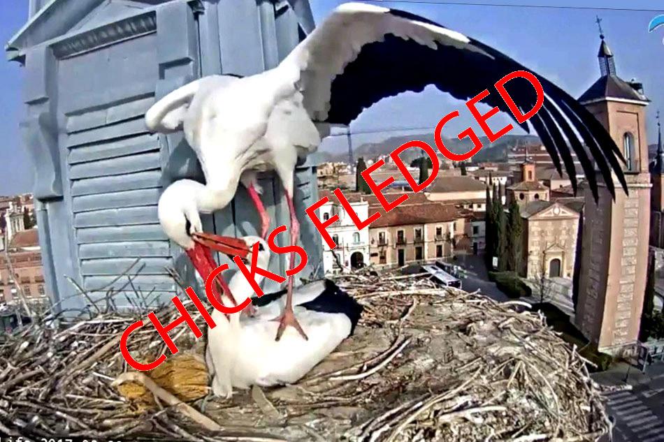 storks in alcala de henares
