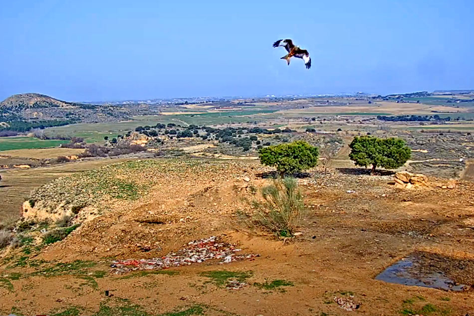 wild bird feeding site in spain