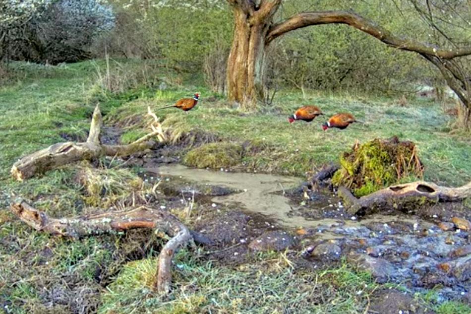 woodland stream in denmark